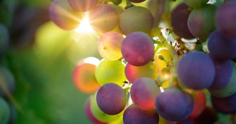 Resveratrol – Wissenschaftliche Faltenpflege aus der Weinranke