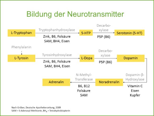 Bildung der Neurotransmitter